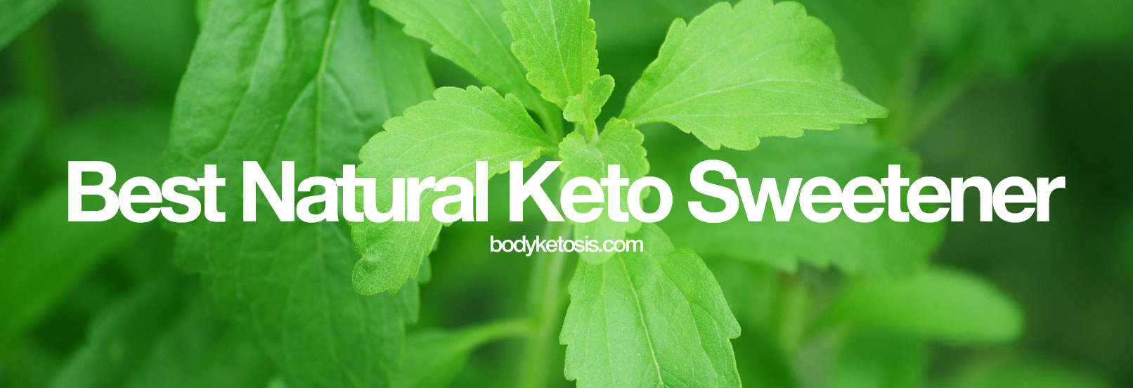 stevia keto food list